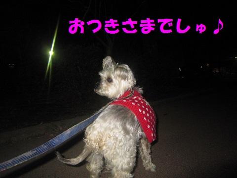 夜さんぽ4