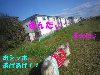 IMG_8018-1.jpg