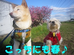 IMG_8041-1.jpg
