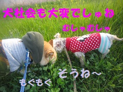 IMG_8081-1.jpg