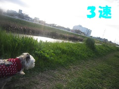 IMG_8083-1.jpg
