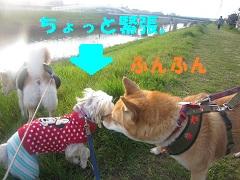 IMG_8098-1.jpg