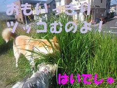 IMG_8228-1.jpg