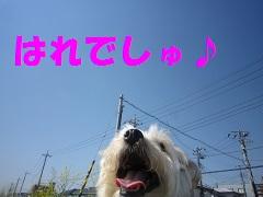IMG_8264-1.jpg