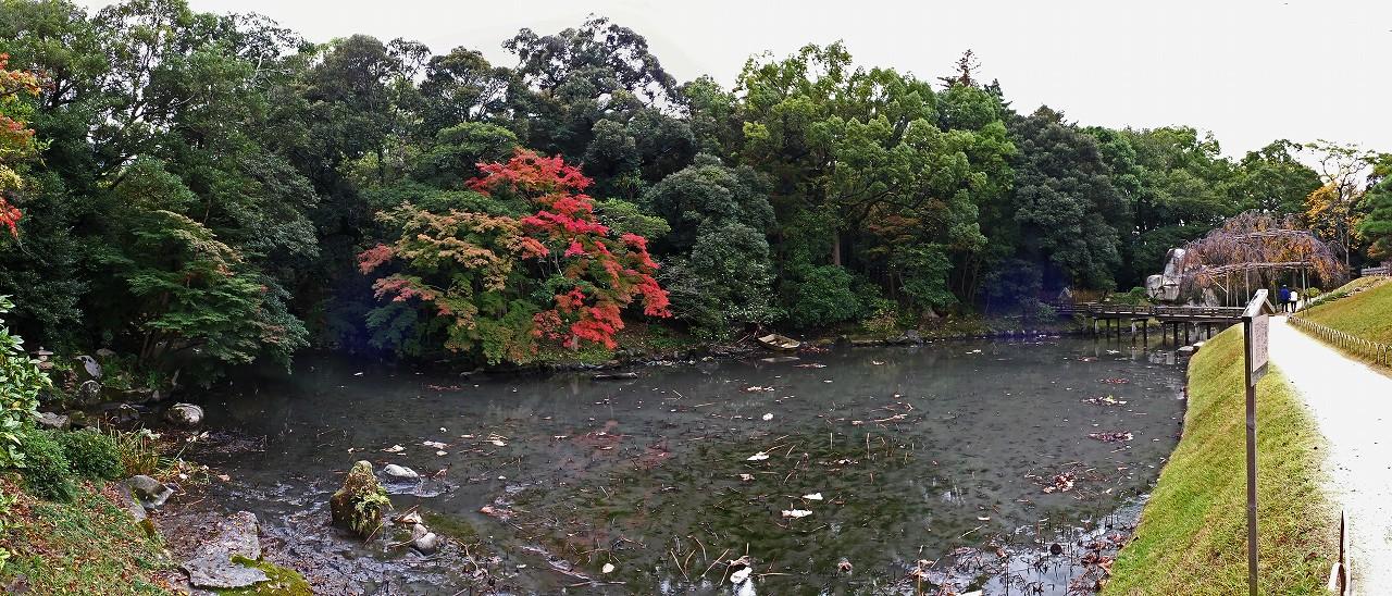 s-20151110 後楽園今日の園内花葉の池の様子ワイド風景 (1)