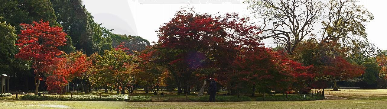 s-20151127 後楽園今日の千入の森の紅葉の様子ワイド風景 (1)