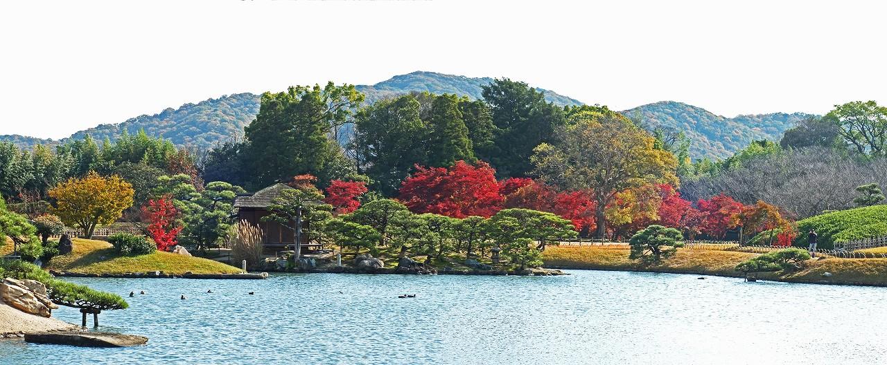 s-20151204 後楽園今日の沢の池越しに眺める千入の森の紅葉ワイド風景 (1)