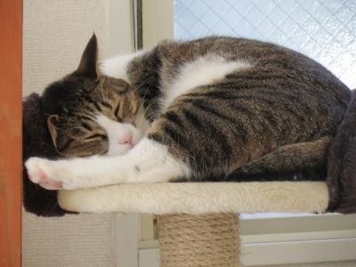 眠り続ける猫