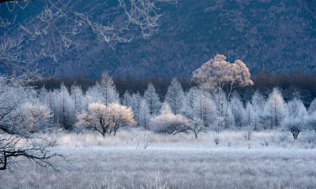 咲いた、咲いた霧氷の花が・貴婦人・小田代ヶ原