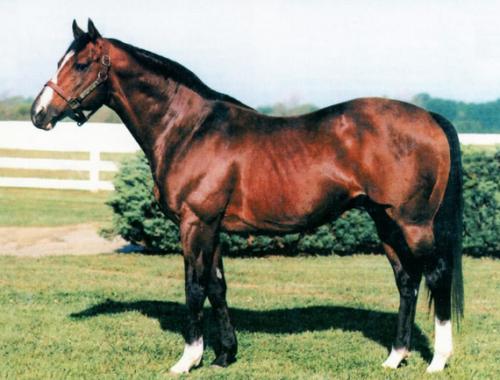 【競馬】種付け料が1番高かった種牡馬はノーザンダンサー?