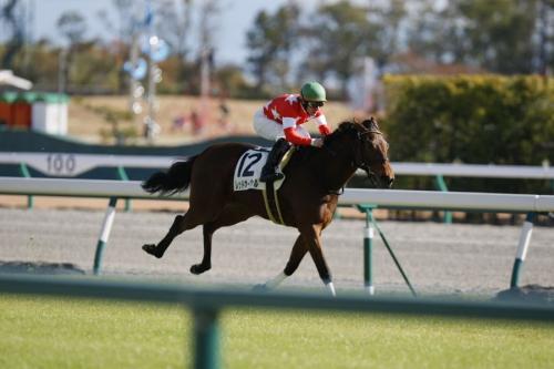 【競馬】完全な「持ったまま」完勝したレース