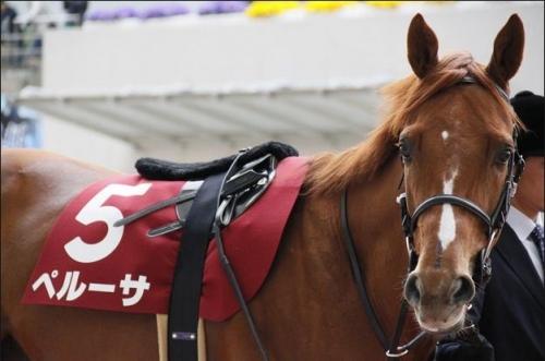 【競馬】ペルーサ有馬記念へ