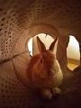 ボルト トンネル昼寝