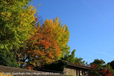 2015秋の京都