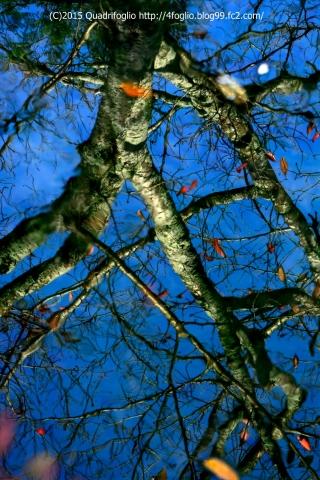 2015秋の京都_哲学の道