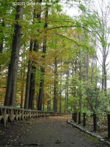 2015秋・神代植物園