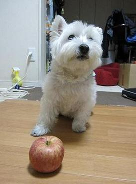 りんごが・・・ 001