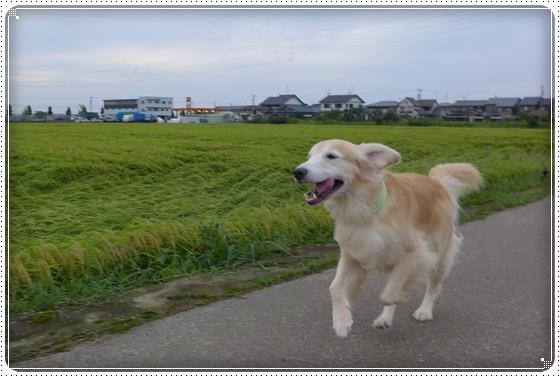 2015,9,2お散歩2