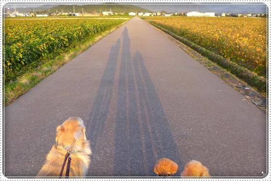 2015,10,2お散歩6