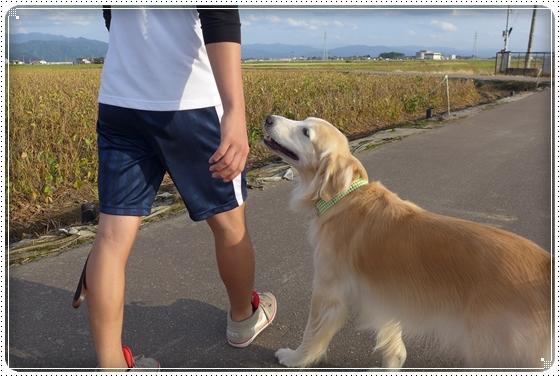 2015,10,4お散歩2