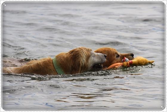 2015,10,18琵琶湖18