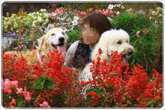 2015,10,24お花畑6