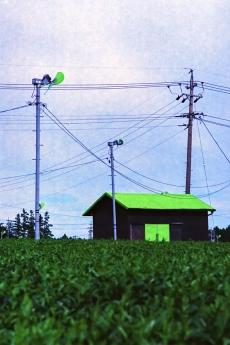 green_h1.jpg