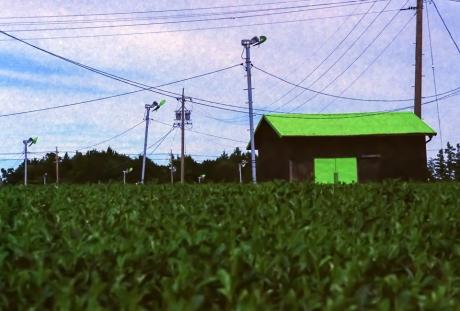 green_h2.jpg