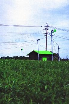 green_h3.jpg