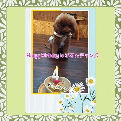 まろんチャン/BirthdayGirlちゃん♪♪