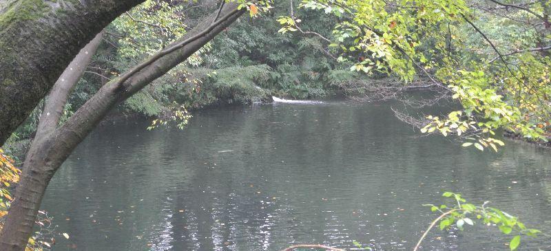 池からの湧水
