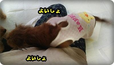 おんぷ膝DSC_1604