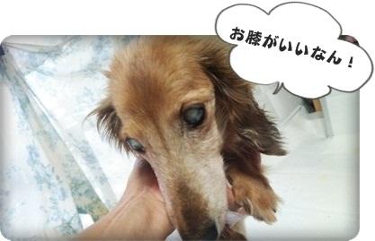 おんぷ膝DSC_1605