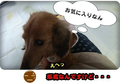 おんぷ膝DSC_1607