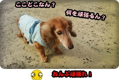 おんぷがんもDSC_1732