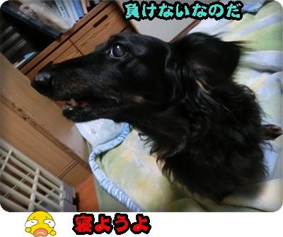トムトム&こく111