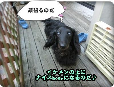 トムトム&こく098