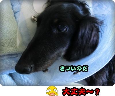 こく縦シュシュ048