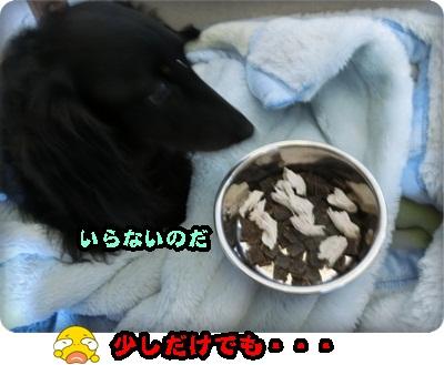 こく縦シュシュ008