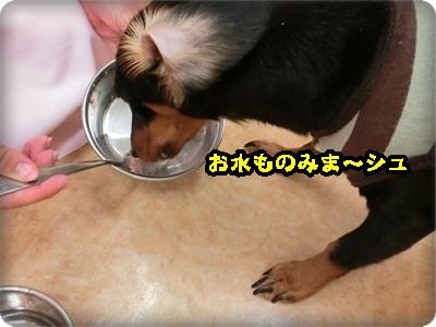 こく縦シュシュ006
