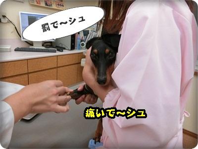こく縦シュシュ007
