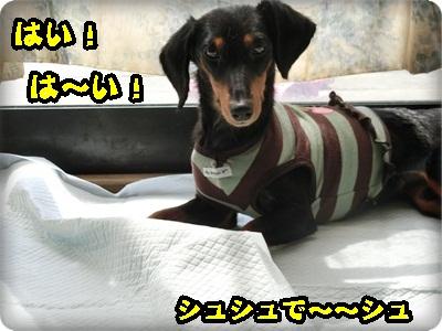 こく縦シュシュ001