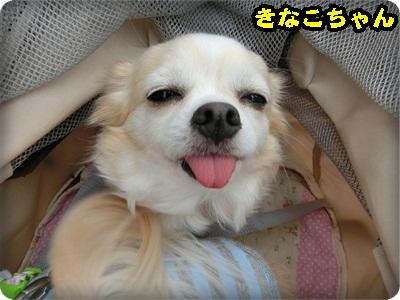 ふく譲渡会093