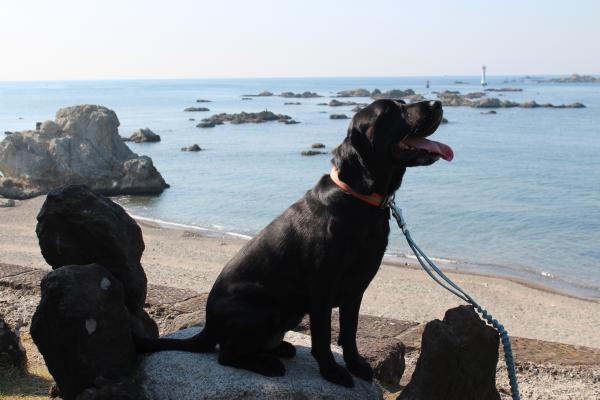 海散歩10