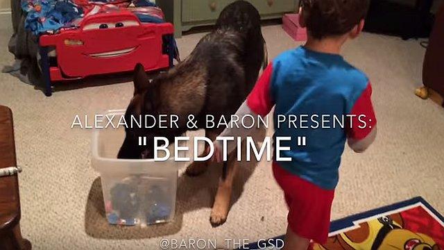 子供を寝かしつける超賢いジャーマンシェパード犬