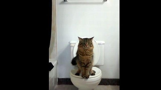 便器で用を足す瞬間の猫の姿勢wwwww