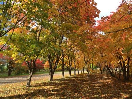 真駒内公園1