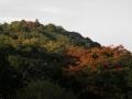 山桜も紅葉してきました