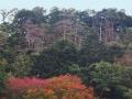 松を彩る楓や