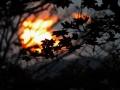 日没の黒紅葉